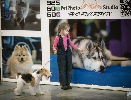 Съемка выставки собак в Экспофоруме